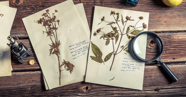 enveloppe-fleurs-sechees